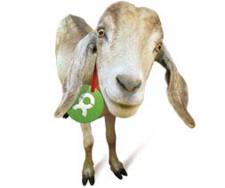 Eddy the Goat