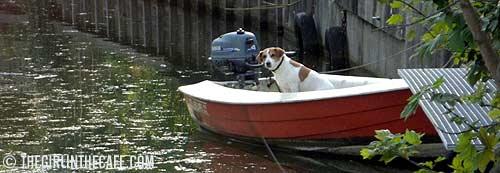 Dog in boat, IJsselstein